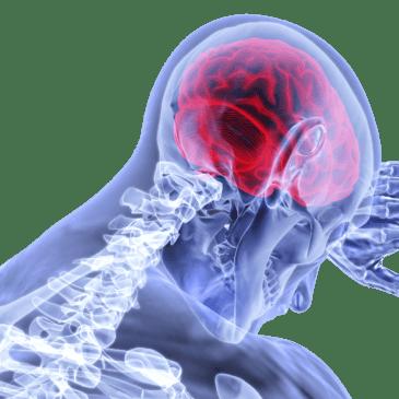 Tarmfloran viktig för hjärnan